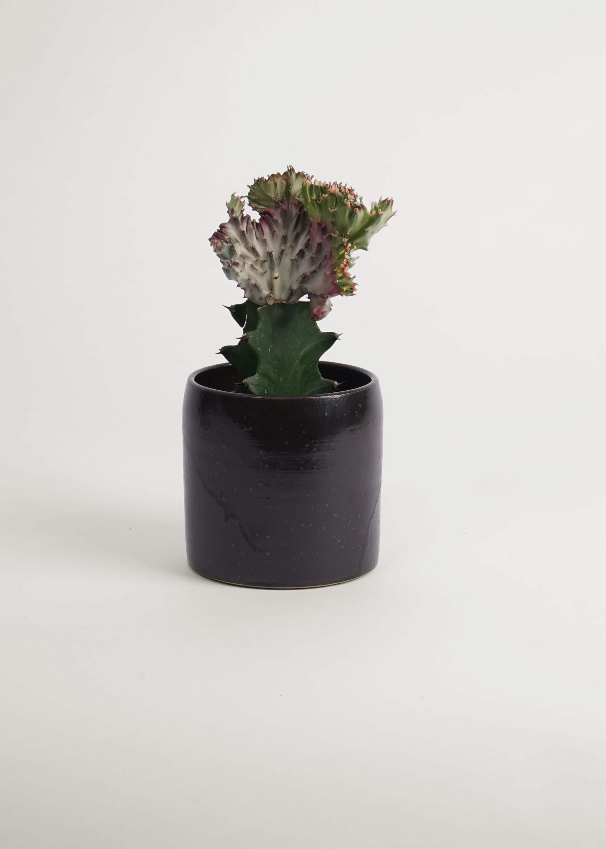 Product image for N° ICD8 Burri Planter S