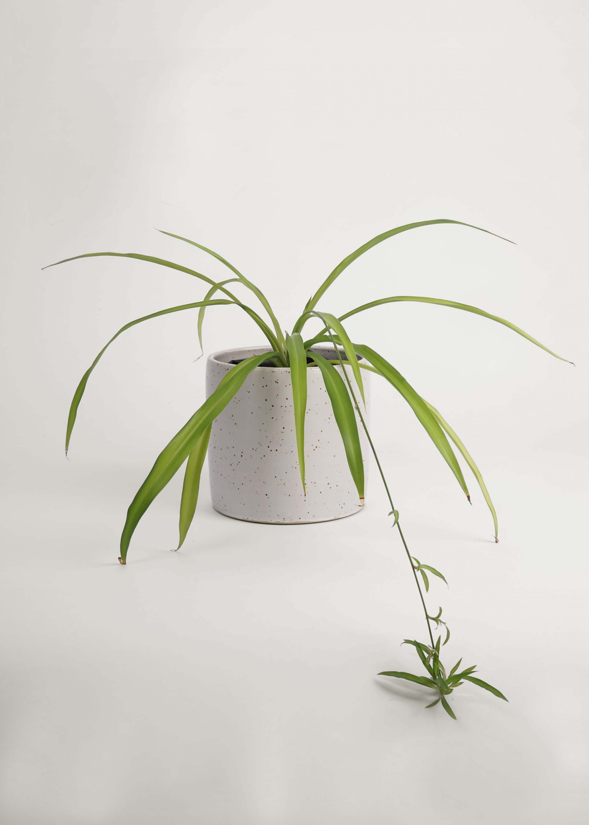 Product image for N° ICD5 Balzar Plant Pot L