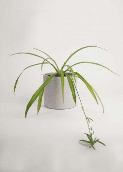 Product thumbnail image for N° ICD5 Balzar Plant Pot L