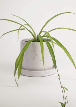Product thumbnail image for N° ICD9 Balzar Planter L