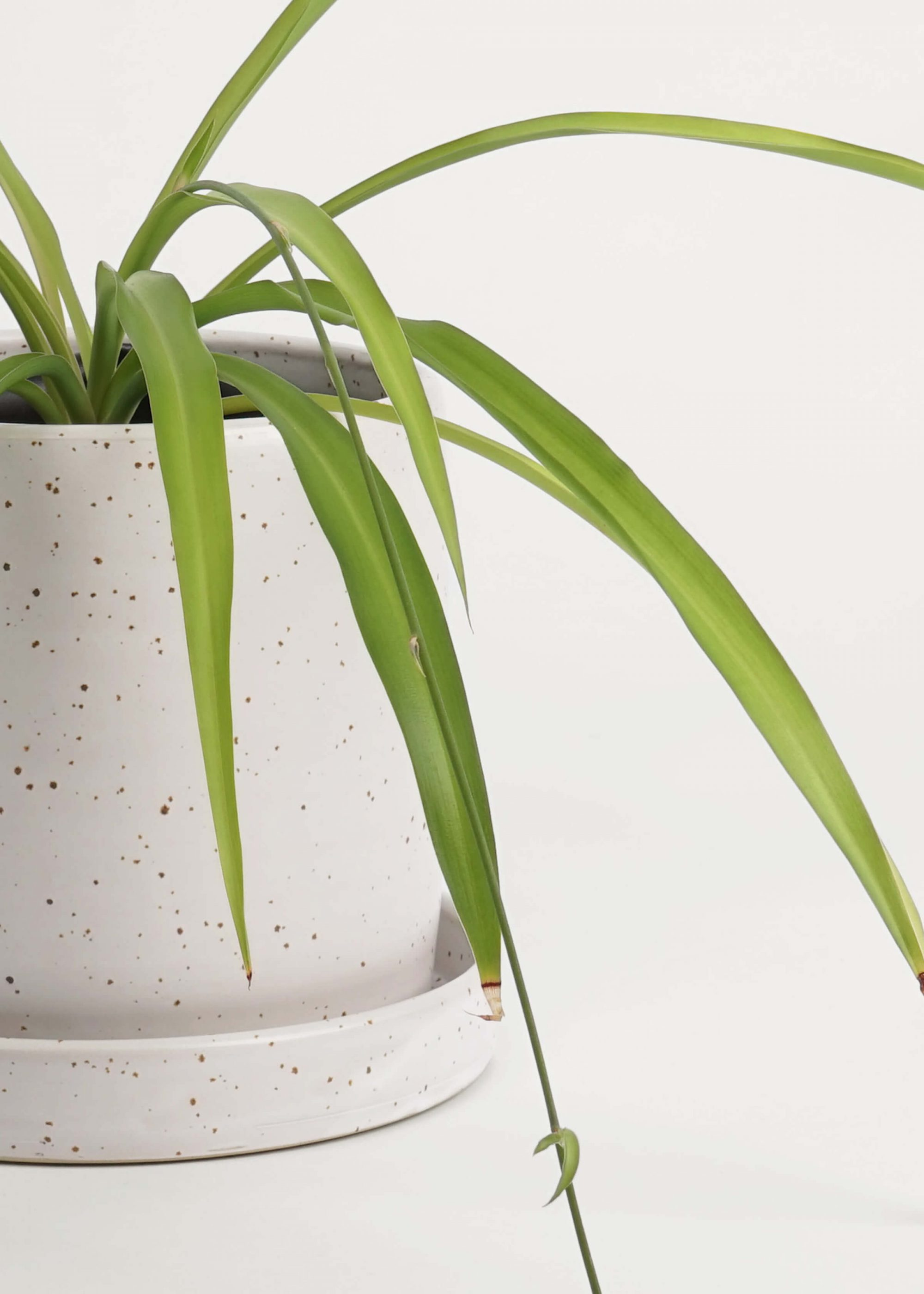 Product image for N° ICD9 Balzar Planter L