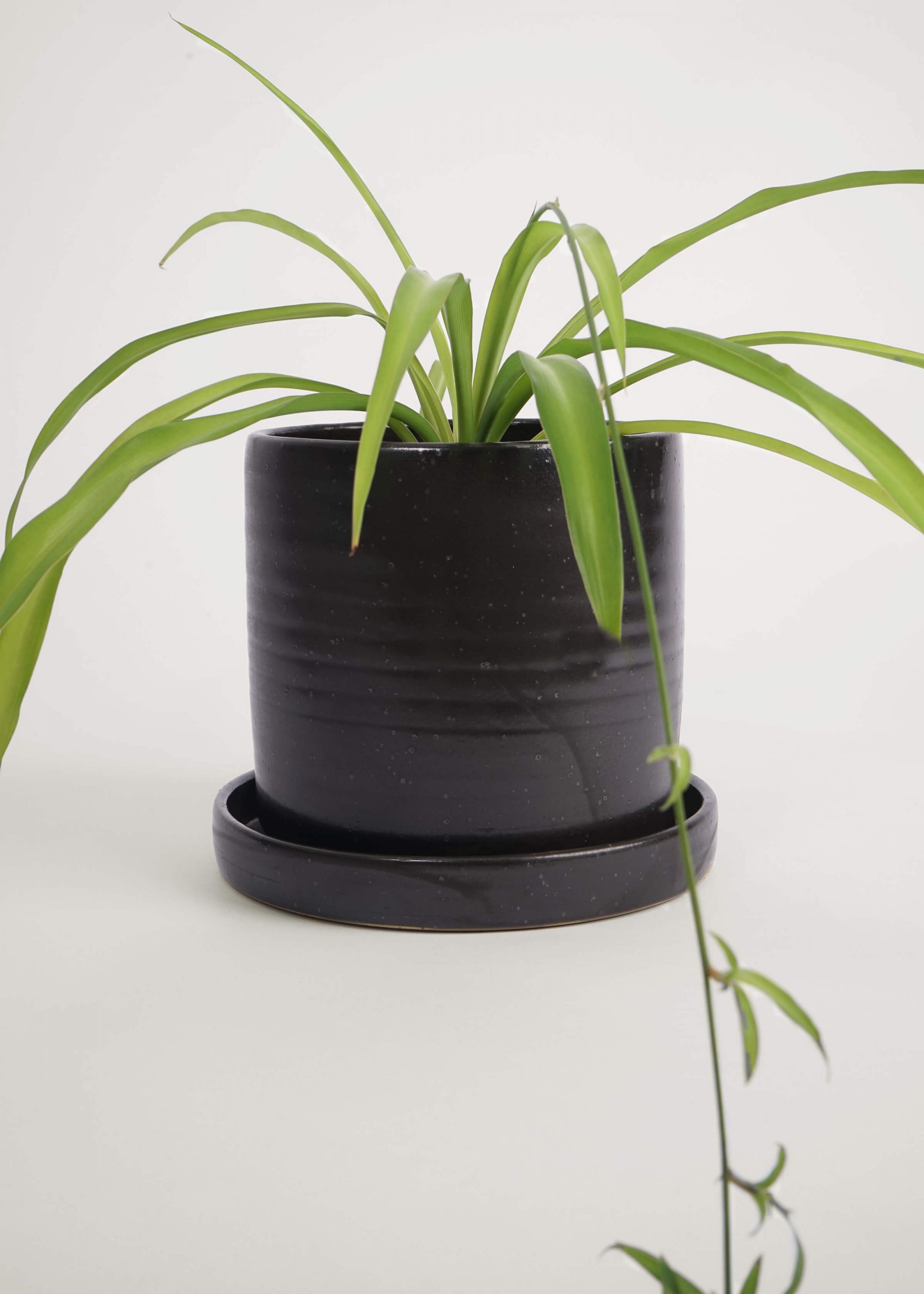 Product image for N° ICD10 Burri Planter L