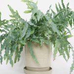 R-EH_Beuys-Grey-Planter-handtrown-Ceramic-Large
