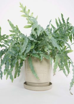 Product thumbnail image for N° ICSD2 BEUYS Planter Grey Large