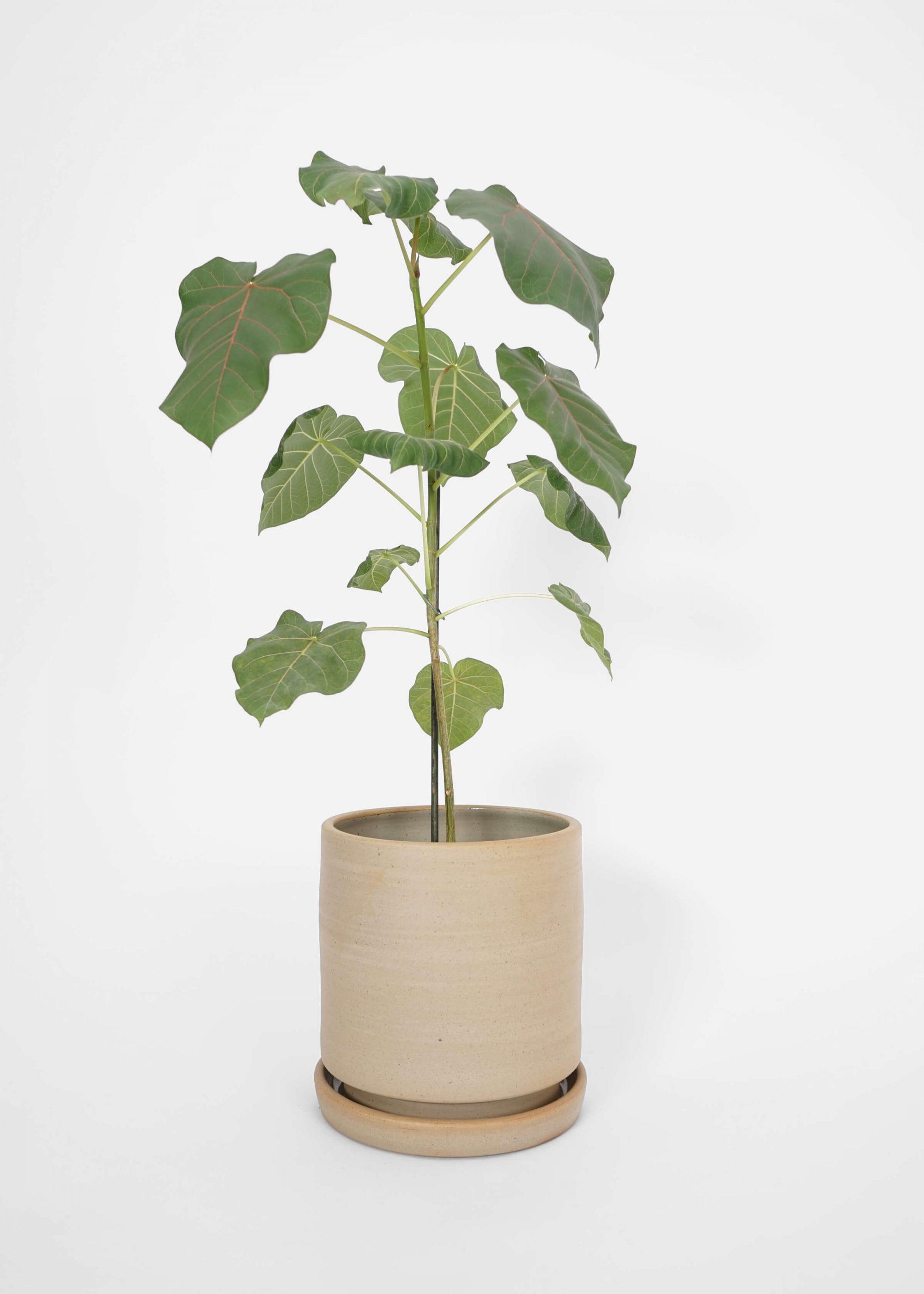 Product image for N° ICSD3 BRUTAL Planter Unglazed Finish Medium