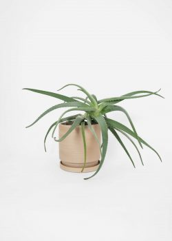 Product thumbnail image for N° ICSD1 BRUTAL Planter Raw Large